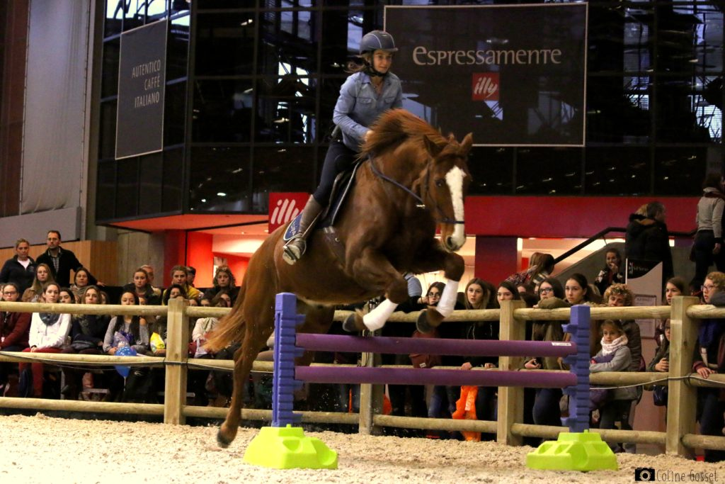 éthologie cheval saut d'obstacle