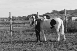débourrage cheval éthologie